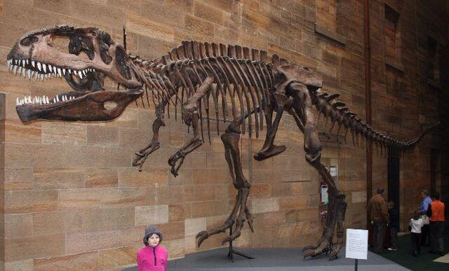 File:Giga fossil.jpg