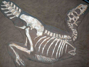 Tarbosaurus fossil