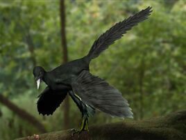 Archaeopteryx life restor