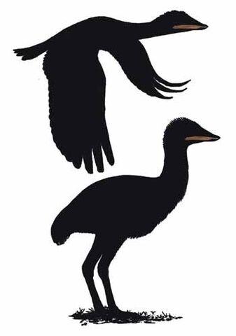 File:Samrukia as bird.jpg
