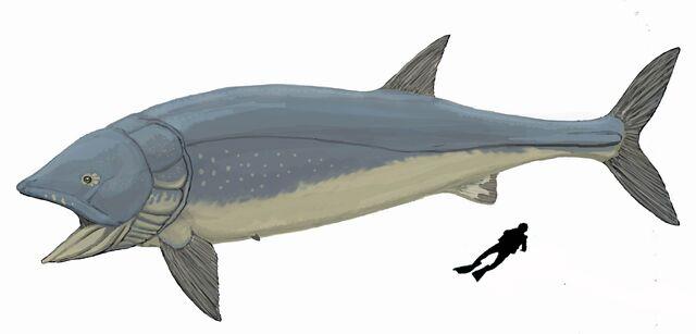 File:Leedsichthys new1DB.jpg