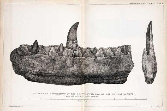File:Megalosaurus Buckland.jpg