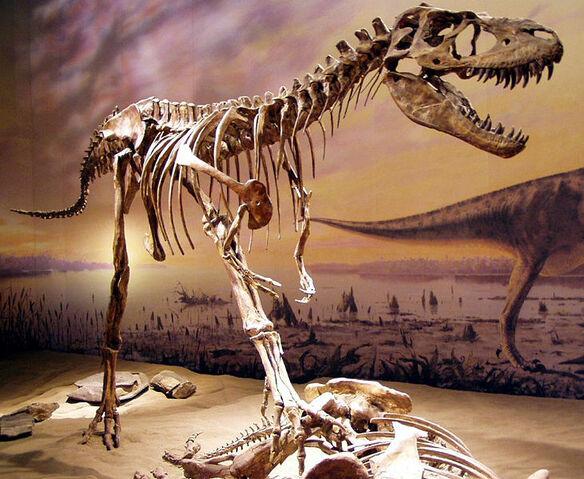 File:Albertosaurus tyrell.jpg