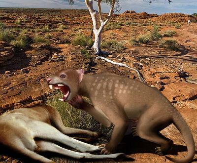 727px-Thylacoleo Australia 2