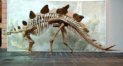 Stegosaurus Senckenberg-1-