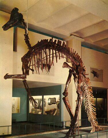 File:Corythosaurus-skeleton-postcard-785x1000-1-.jpg