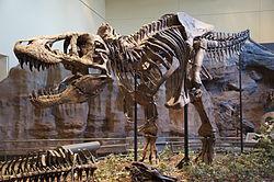 File:250px-Tyrannosaurus Rex Holotype-1-.jpg