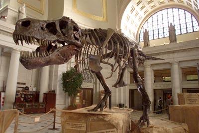 Age-dinosaur-bones-1