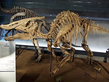 File:Saurolophus.skeleton-1-.jpg