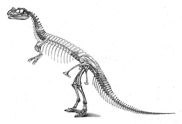 File:CeratosaurusSkeleton-1-.jpg