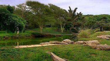 Croc lake