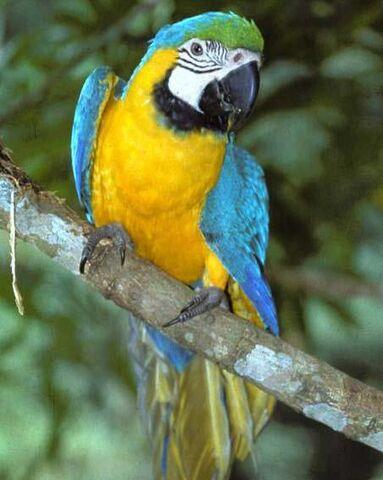 File:Macaw edited.jpg