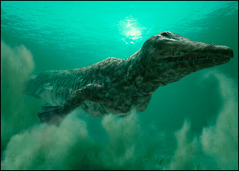 File:Ambulocetus hzoom.jpg