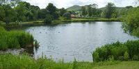 Noobish's pond