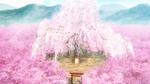 PCDS Big sakura tree in Ichigozaka