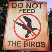 DO NOT FEED THE BIRDS