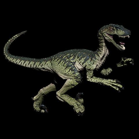 File:Novaraptor.png