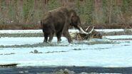 813px-Mammoth