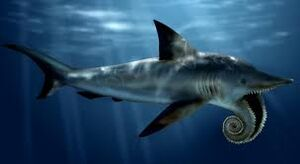 Helicoprion1