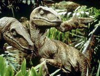 Africanraptor