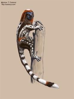 Darwinius csotonyi