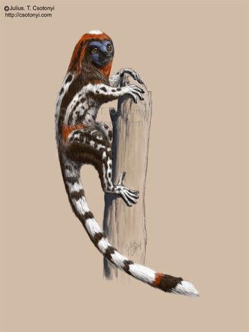 File:Darwinius csotonyi.jpg