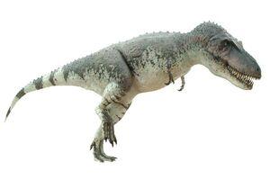 Daspletosaurus024