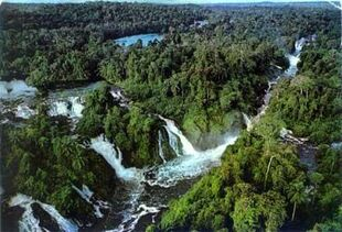 1781077-rainforest super