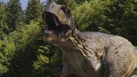 Albertosaurus adult