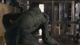 1x6 Predator 6
