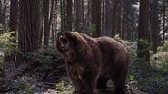 NW1x7 Bear