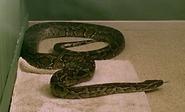 1x4 Python