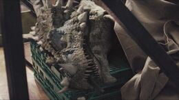 3x7 Dracorex 67