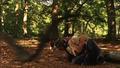 1x5AnurognathusswoopingAbbyandConnor