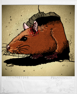 Ill chap3 rat