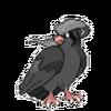 Edgy Pidgeot