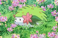 Tn shaymin campo flores