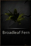 File:BroadleafFern.png