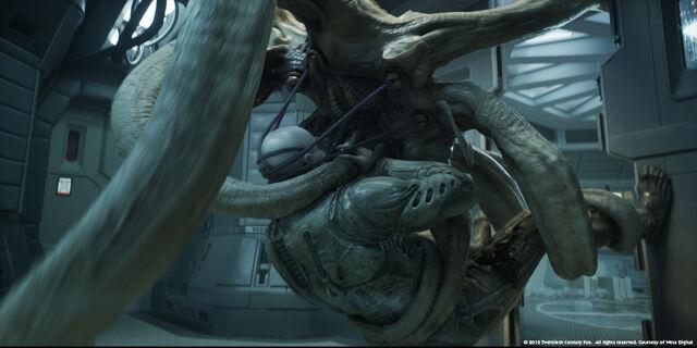 File:Trilobite.jpeg