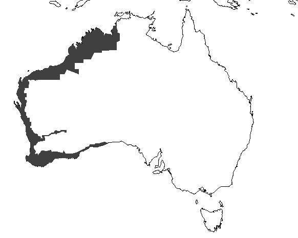 File:Australia Draft.2.jpg