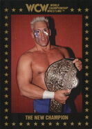 1991 WCW Collectible Trading Cards (Championship Marketing) Sting 22