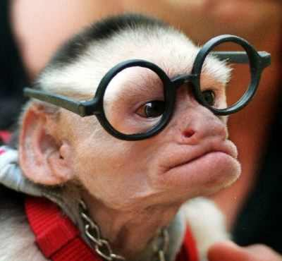 File:Monkey-with-glasses.jpg