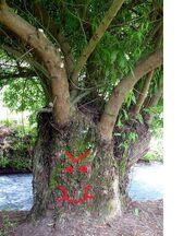 Evil tree2