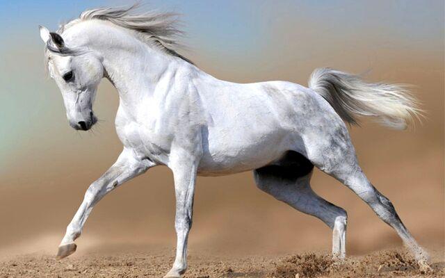 File:White-horse.jpeg