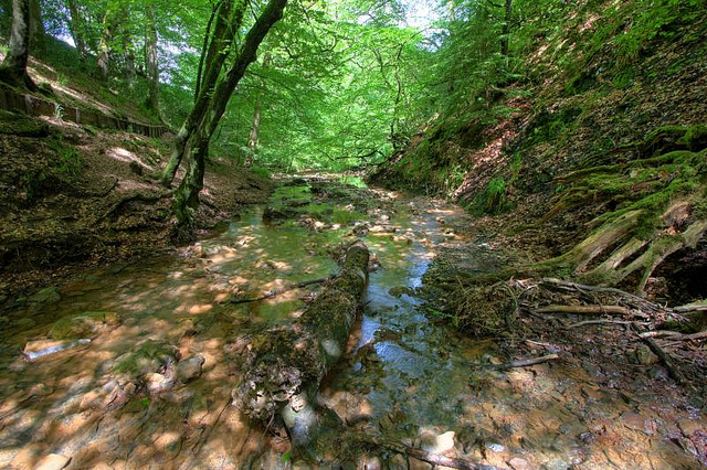 File:Welsh-woods3.jpg