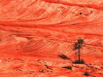 Red-Stone-Desert