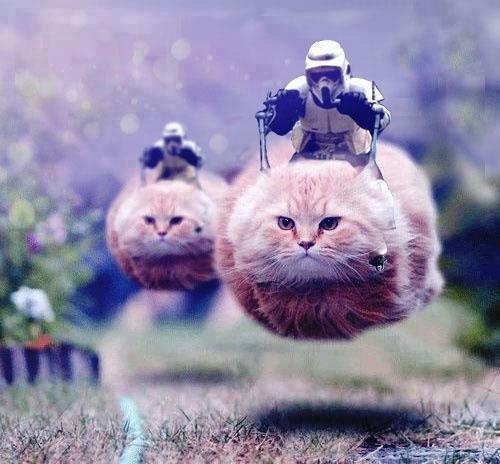 File:Storm-trooper-cats.jpg