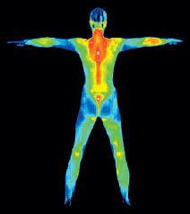 File:Thermoregulation.jpg