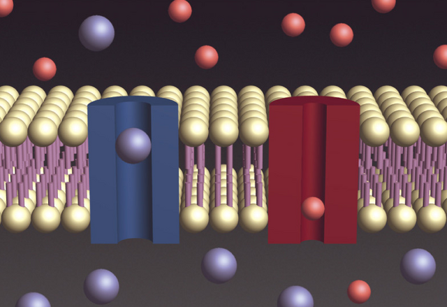 File:Cell-membrane-electrochemical.PNG