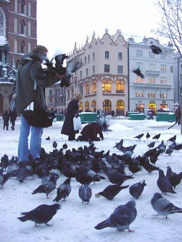 File:Poland-Krakow-Pigeons.jpg